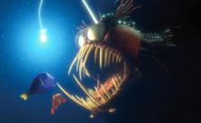 Nemo_Angler